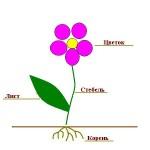 Схема растения