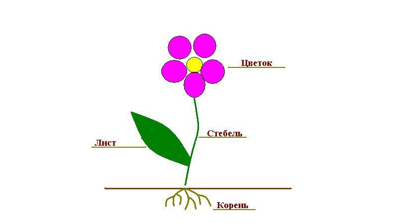 Теневыносливые цветы для сада: многолетние красавцы 31