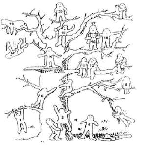 материал к методике Дерево